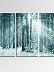 VISUAL STAR®3 Panel Forest Photos Print on Canvas Wall Decoration Scenery Wall Art Ready to Hang