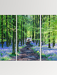 VISUAL STAR®3 Panel Lavender Photos Print on Canvas Wall Decoration Landscape Wall Art Ready to Hang