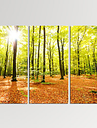 VISUAL STAR®3 Panel Forest Photos Print on Canvas Wall Decoration Landscape Canvas Artwork Ready to Hang