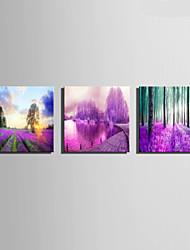 E-HOME® Stretched Canvas Art Purple Beauty Decoration Painting  Set of 3