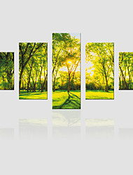 JAMMORY Canvas Set Landscape ,Five Panels Gallery Wrapped, Ready To Hang Vertical Print No Frame Castle Tree