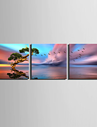 E-HOME® Stretched Canvas Art A Tree On The Surface Of The Water Decoration Painting  Set of 3