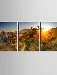 E-HOME® Stretched Canvas Art Scenery on The Mountain Decoration Painting  Set of 3