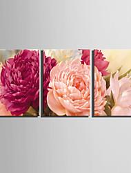 ботанический Холст для печати 3 панели Готовы повесить , Вертикальная