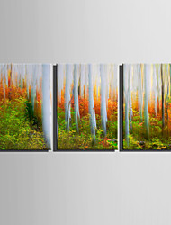 E-HOME Stretched Canvas Art Colors of The Woods Decoration Painting  Set Of 3