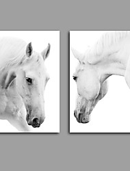 Stretched Canvas Print / Unframed Canvas Print Animal Modern White HorseTwo Panels Canvas Vertical Print Wall Decor For Home Decoration
