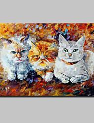 Peint à la main Animal POP Peintures à l'huile,Moderne Un Panneau Toile Peinture à l'huile Hang-peint For Décoration d'intérieur