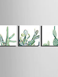 E-HOME Stretched Canvas Art Different Forms of Cactus Decoration Painting One Pcs
