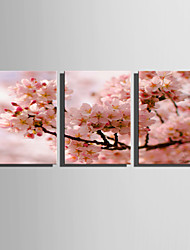 E-HOME Stretched Canvas Art Pink Flowers Decoration Painting Set Of 3