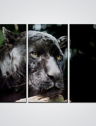 Canvas Print Black Leopard  Animal Picture Printed on Canvas  Ready to Hang 30x60cmx3pcs