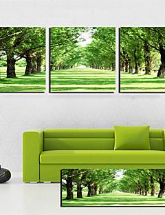 3 켄버스 예술 풍경 녹색 나무 도로 설정