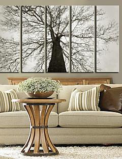 Intinsa Canvas Art Botanică copac bătrân Set de 5