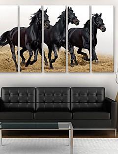 e-FOYER toile tendue es un cheval courir décoratif ensemble de cinq de peinture