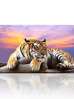 נסיעות / בעלי חיים / נוף / צילום / מודרני הדפסת בד פאנל אחד מוכן לתלייה , אופקי