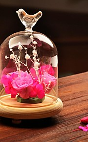 tabellen center DIY terrarium / fugl glassdekselet bord deocrations (planter ikke inkludert)