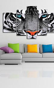 시각 star®black 및 중지 할 준비가 5 고품질의 캔버스의 흰색 야생 호랑이 동물 캔버스 세트