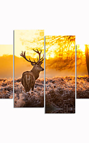 캔버스 사슴 동물 높은 auality에 시각적 star®sunset 사진 디지털 인쇄 캔버스를 뻗어
