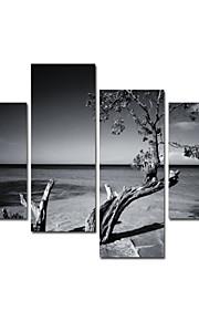 visuelle star®black und weißen Baum Leinwanddruck für Heimtextilien