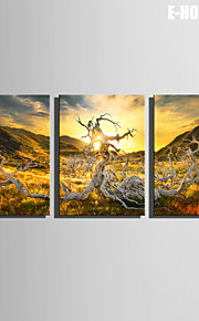 E-HOME® Stretched Canvas Art Tree Roots Under The Sun Decoration Painting  Set of 3
