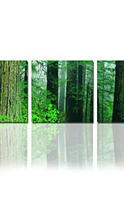 arbre star®green visuelle Toiles Tendues la maison forestière de décoration arts prêt à accrocher