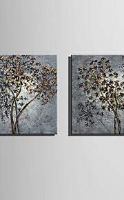 Kasvitiede Canvas Tulosta 2 paneeli Valmis Hang , Neliö
