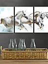 Impressao em tela esticada animal arte Branco Cavalos