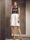 Knee-length Satin / Lace Bridesmaid Dress - Multi-color Plus Sizes / Petite Sheath/Column Strapless