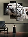 Stretched Canvas White Tiger Decoration Set of 4