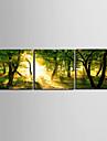 Sträckta kanvas Landskap gult ljus om skogen Set av 3
