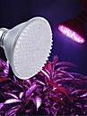 Dekorativ LED-växtlampa , E26/E27 8 W 168 Högeffekts-LED 800LM LM Röd / Blå AC 220-240 V