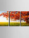 toile set Paysage / A fleurs/Botanique Style europeen,Trois Panneaux Toile Verticale Imprimer Art Decoration murale For Decoration