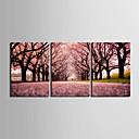 Protezala Canvas print umjetnosti Pejzaž Put Sakura Set od 3