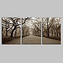 Rastegnut Canvas Art Pejzaž Central Park Set od 3