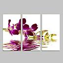 視覚star®orchid花がハングアップする準備ができてキャンバスプリント壁の装飾の芸術を延伸しました