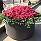 1 1 Podružnica Polyester / Plastika Azaleja Cvjeće za stol Umjetna Cvijeće 15.74Inch/40cm