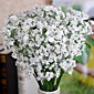 1 1 Podružnica Others Dječji dah Zidno cvijeće Umjetna Cvijeće